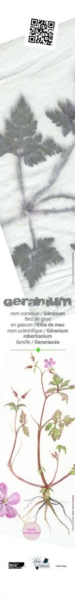 Capture-geranium