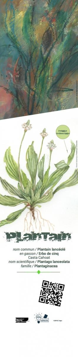 capture-plantain